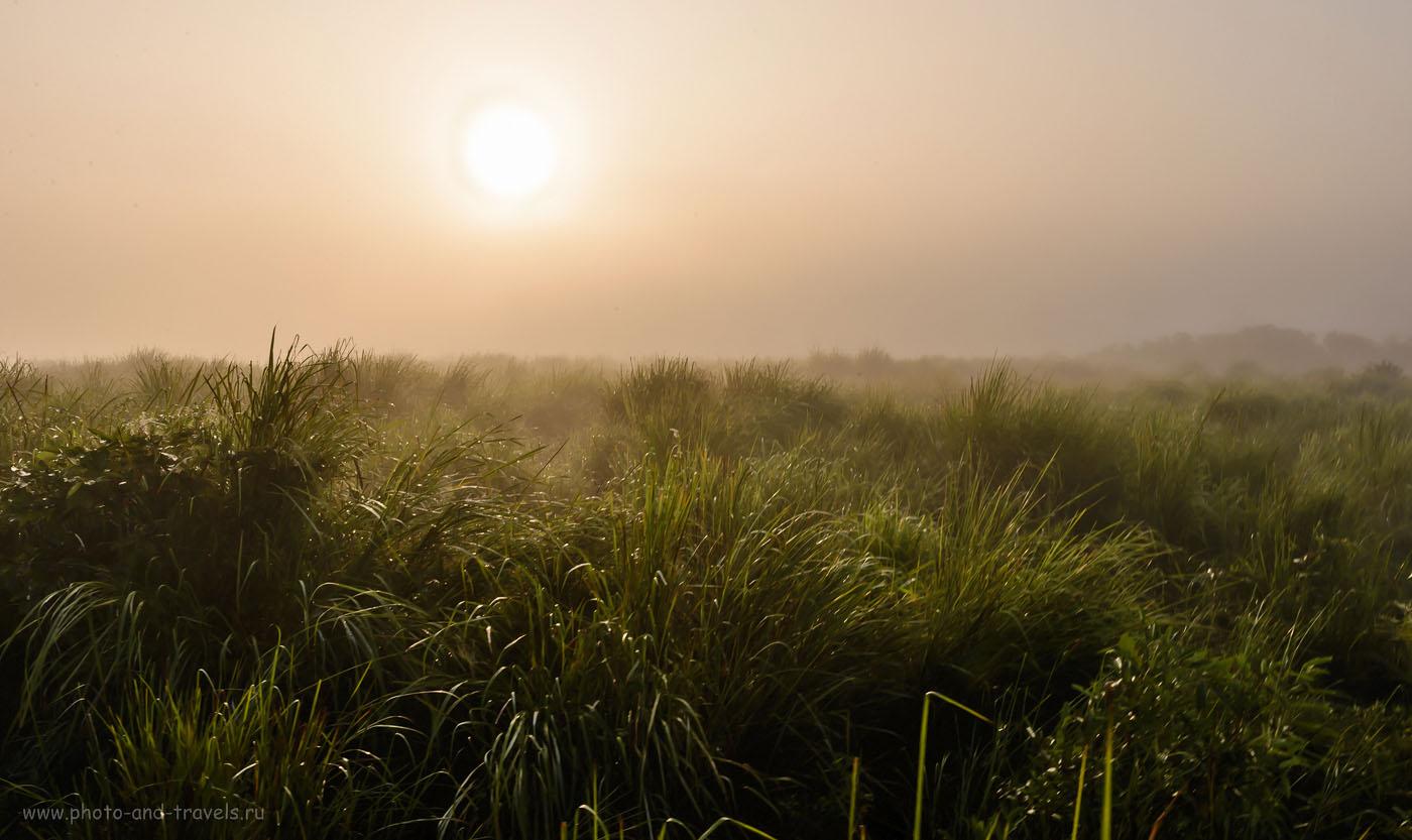 Фото 7. Солнце в парке Казиранга восходит все выше, припекает. Из опыта сафари в Шри-Ланке мы знаем, что на жаре животные прячутся и уже никого не увидишь. Отчет об отдыхе в Индии дикарями. 1/125, -0.33, 22, 200, 27.