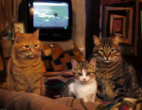 Кошки Мари