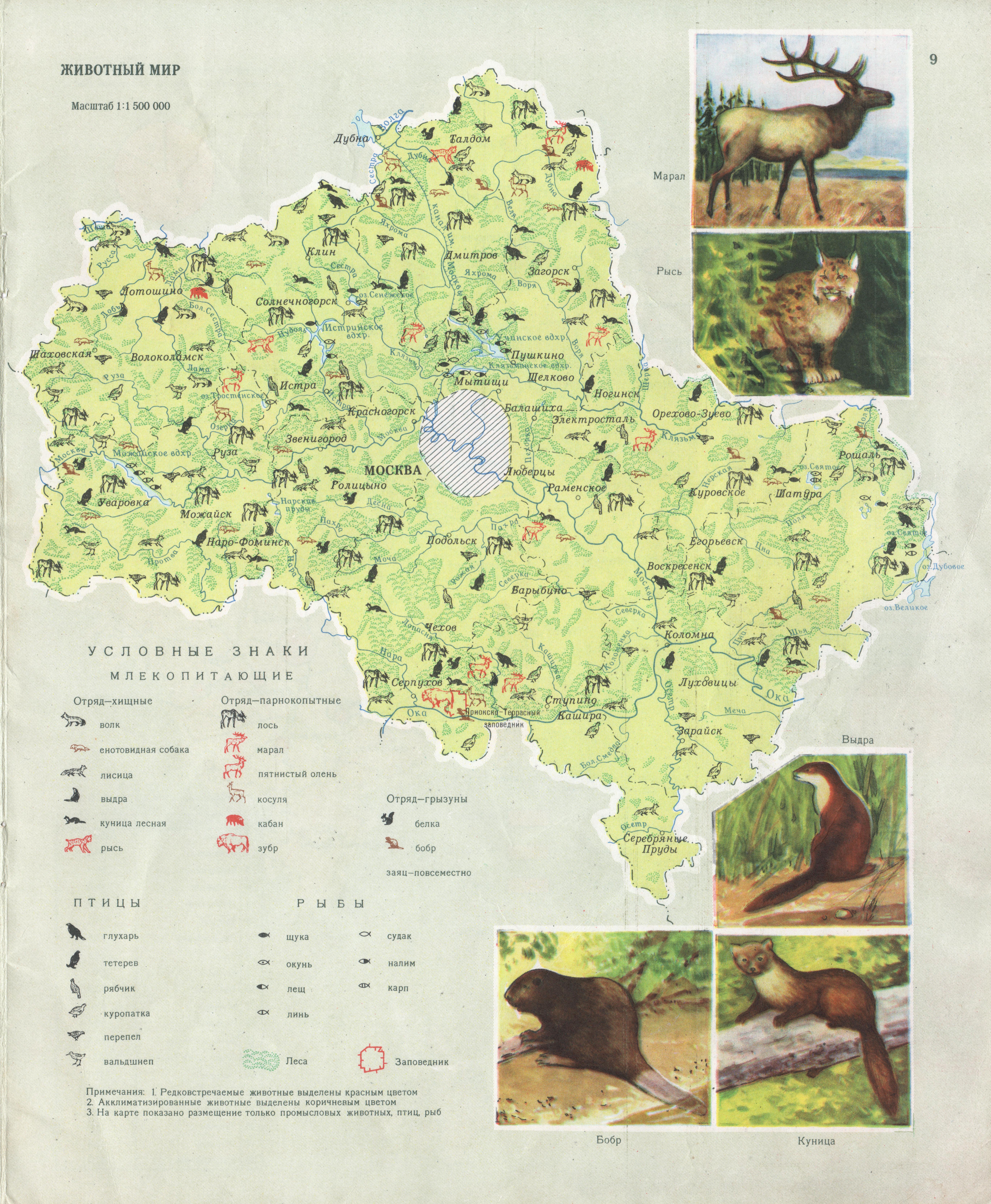 Карта животного мира Москвы и Московской области смотреть онлайн