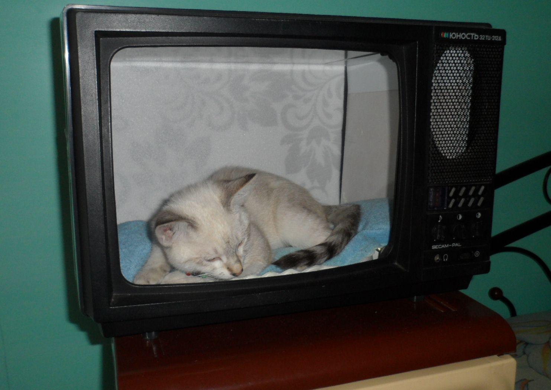 Домик для кошки на заказ - 1