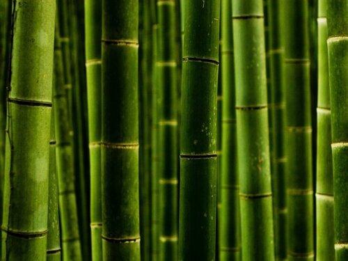 Бамбуковые обои из бамбукового полотна