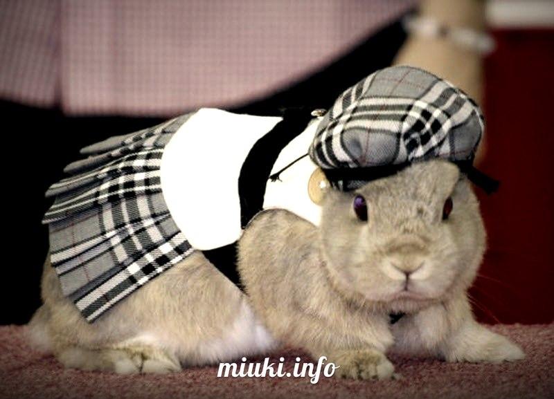 Кроличья мода в Японии