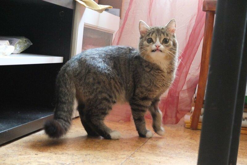 кот Гоша похожий на сову