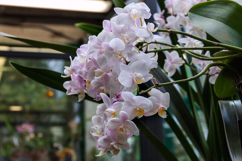 Нежная веточка орхидеи
