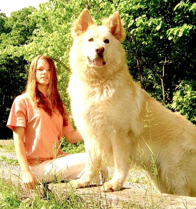 Залог хорошей фотографии— правильно выбранная собака.