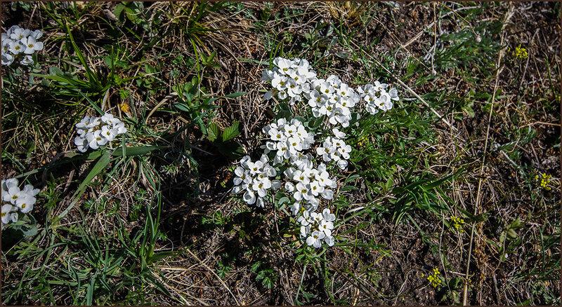 Цветы под ногами