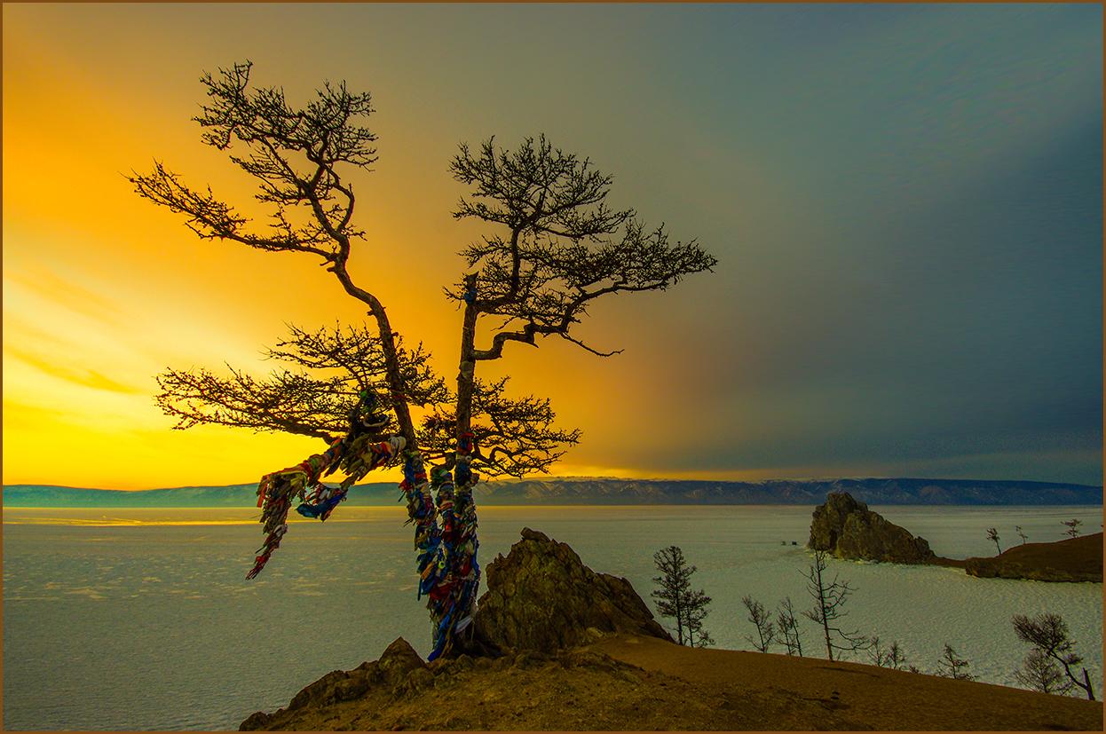 Закат у священного дерева