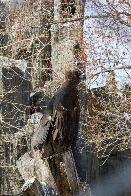 Орел, Пекинский зоопарк
