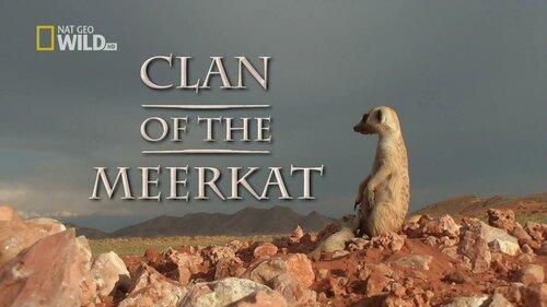 Клан сурикатов