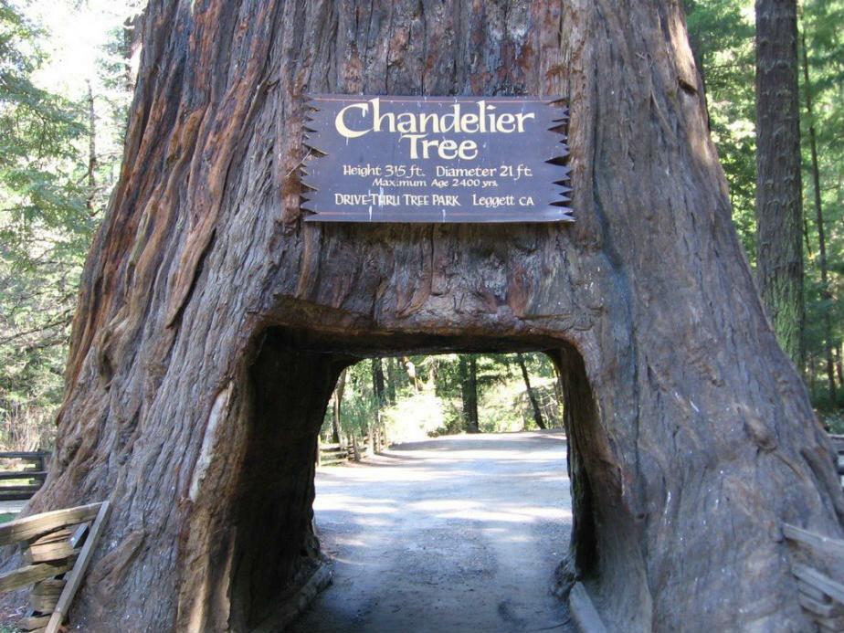 Дерево-тоннель