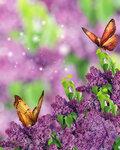 Lilac (4).jpg