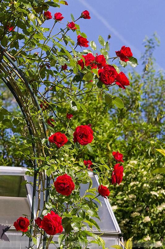 Я люблю все цветы, часть 57.