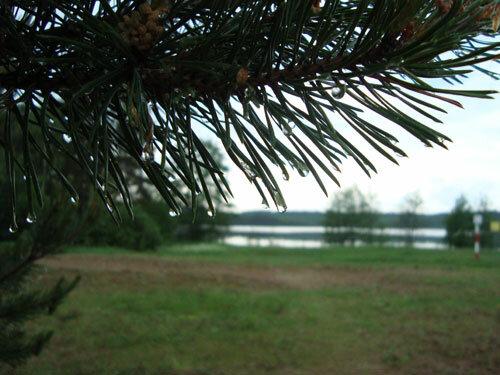 Отдых в Беларуссии: Нарочанские озера, после дождя