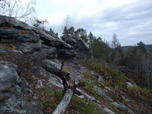 Вокруг много поваленных деревьев