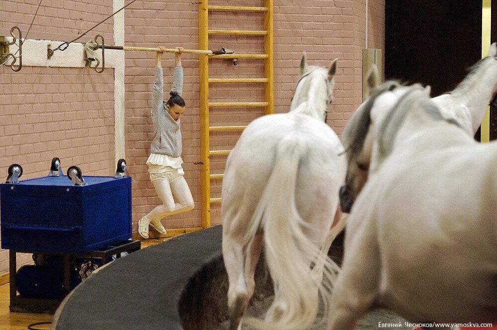 Осень. Цирк Никулина. Лошади. 22.10.15.04..jpg