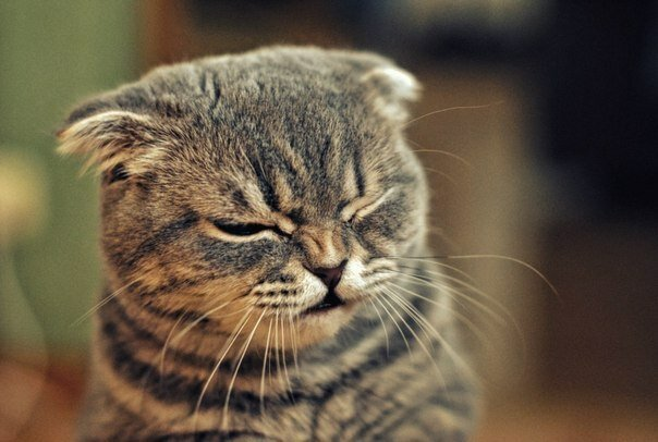 Понедельник день тяжелый картинки смешные с кошками, футболки надписями