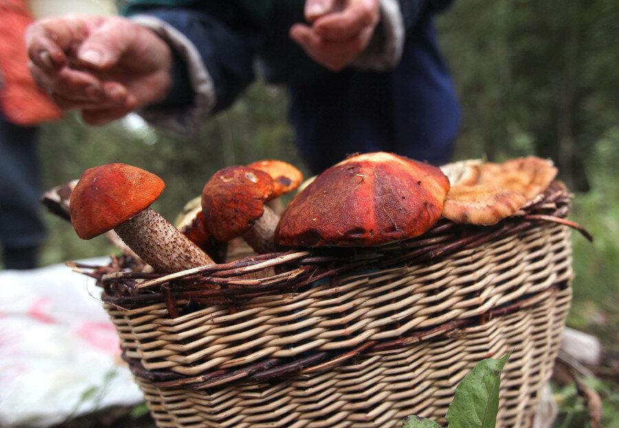 российские грибы – лучшие в мире