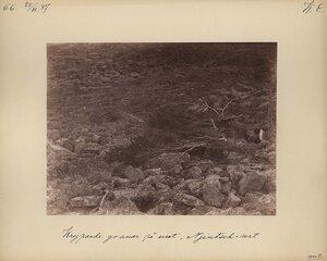 25.7.1887. Ельник на возвышенности Нинчурт