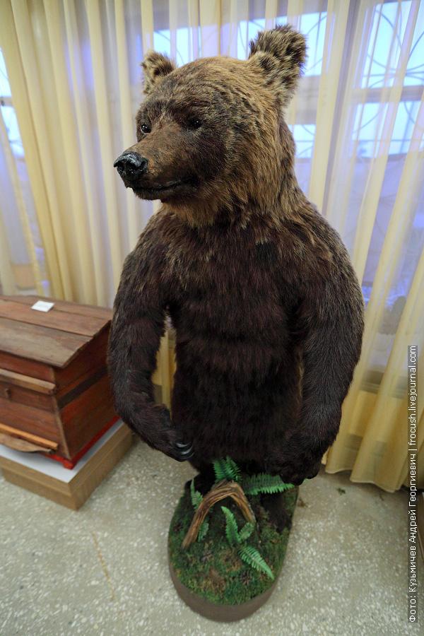 Вятско-Полянский медведь