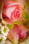 Bouquet of  pink roses 05.jpg