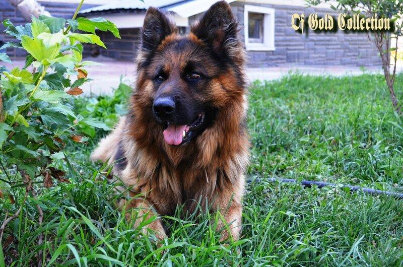 http://img-fotki.yandex.ru/get/9253/134559744.12/0_a4694_1164a88f_XL.jpg