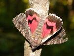 Тихо бабочка присела...