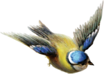 ldavi-paintersfaeries-flyingbird2.png