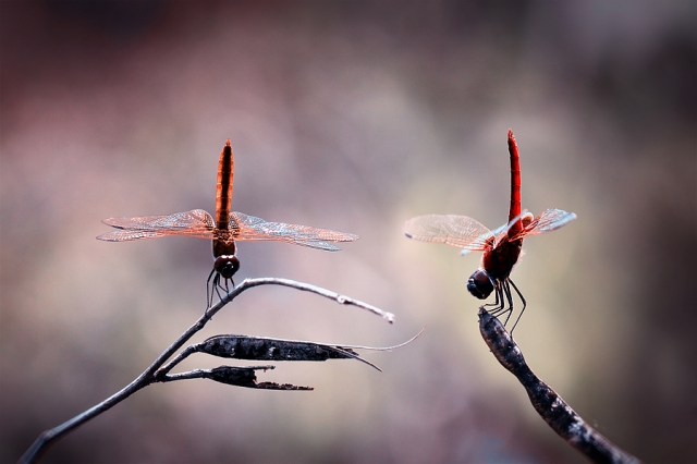 Мастер удачных фото, сделанных в нужный момент… Нордин Серайан (Nordin Seruyan)