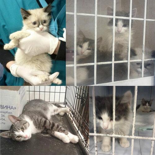 Москва. 5 котят после кучи болезней. Помогите оплатить долги за лечение!…