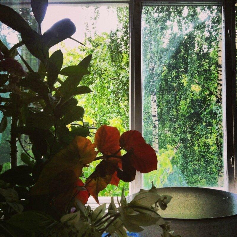 Июньское (2013) Окно в Сокол