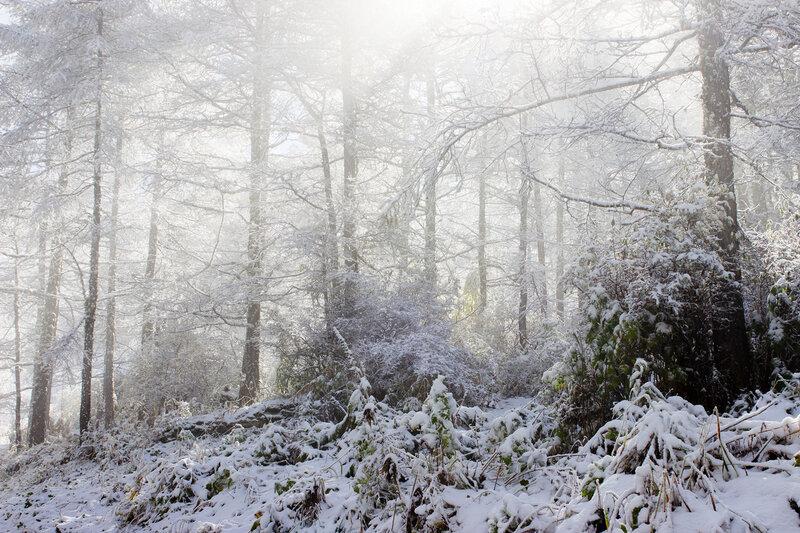 лес, снег, солнце