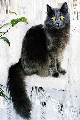 Красивый котик позирует