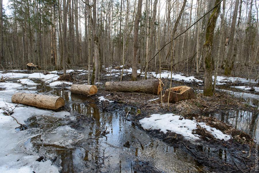 санитарная вырубка леса