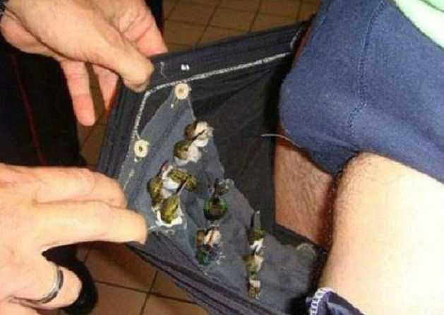 Таможенники в Запорожье оштрафовали турецкого туриста за попытку провезти 12 тысяч долларов - Цензор.НЕТ 1444