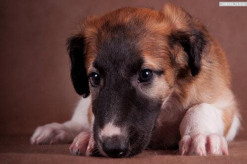 пофотографирую Ваших собак! 0_15d45d_90a65476_L
