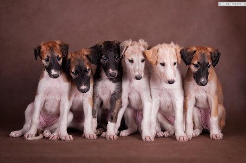 пофотографирую Ваших собак! 0_15d475_8e579f76_L