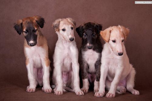 пофотографирую Ваших собак! 0_15d47a_a6ce1f2f_L