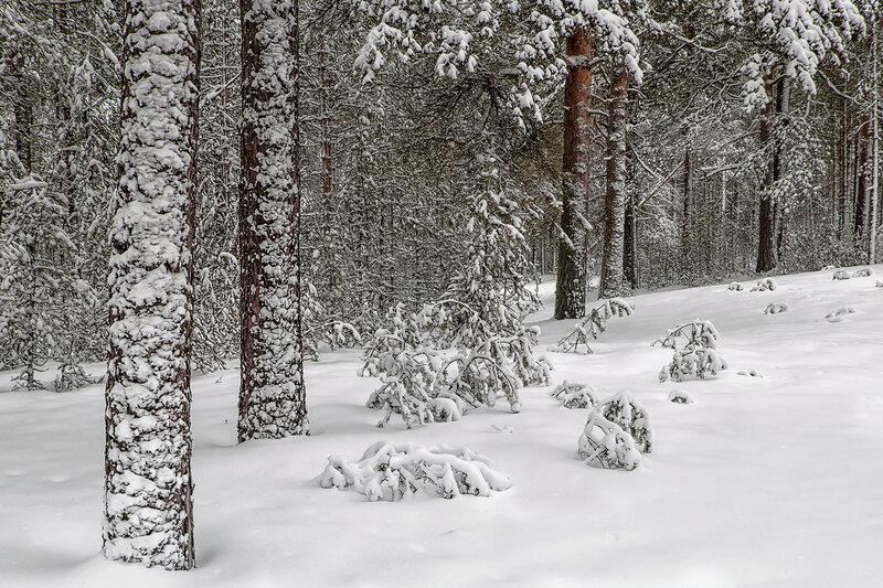 Скоро зимушка-зима