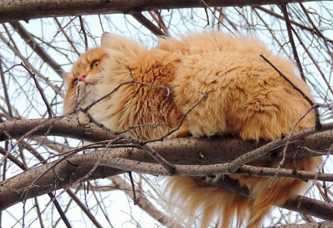 Surovye-sibirskie-kotiki-14-foto