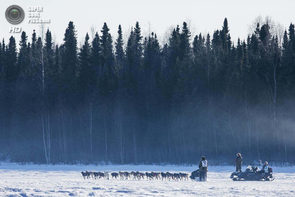 США. Уиллоу, Аляска. 2 марта. Упряжка Сонни Линднера направляется в лес — последняя среди всех участ
