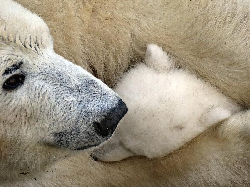 Поцелуй перед сном)))