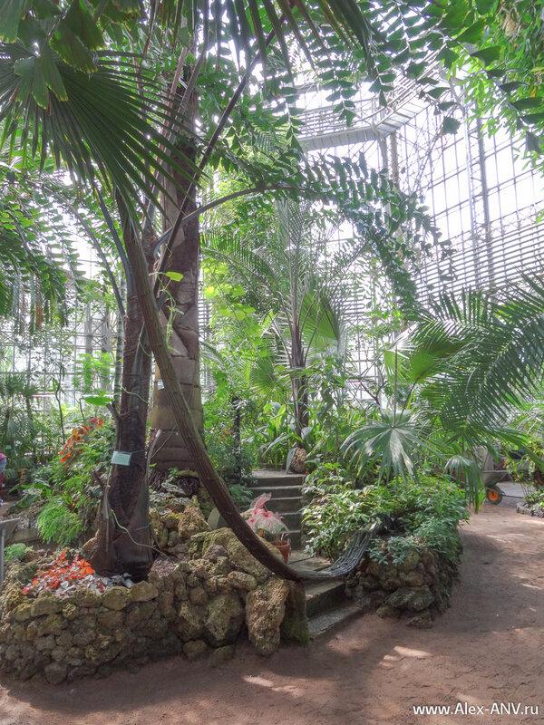 Пальмовая оранжерея - самая высокая в Ботаническом саду. Но и пальмы здесь растут не маленькие.