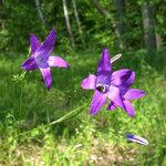 Лето фиолетового цвета