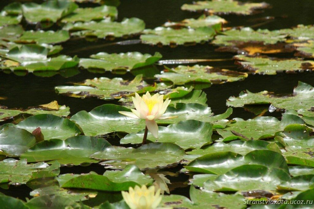 Тенерифе, Джангл Парк