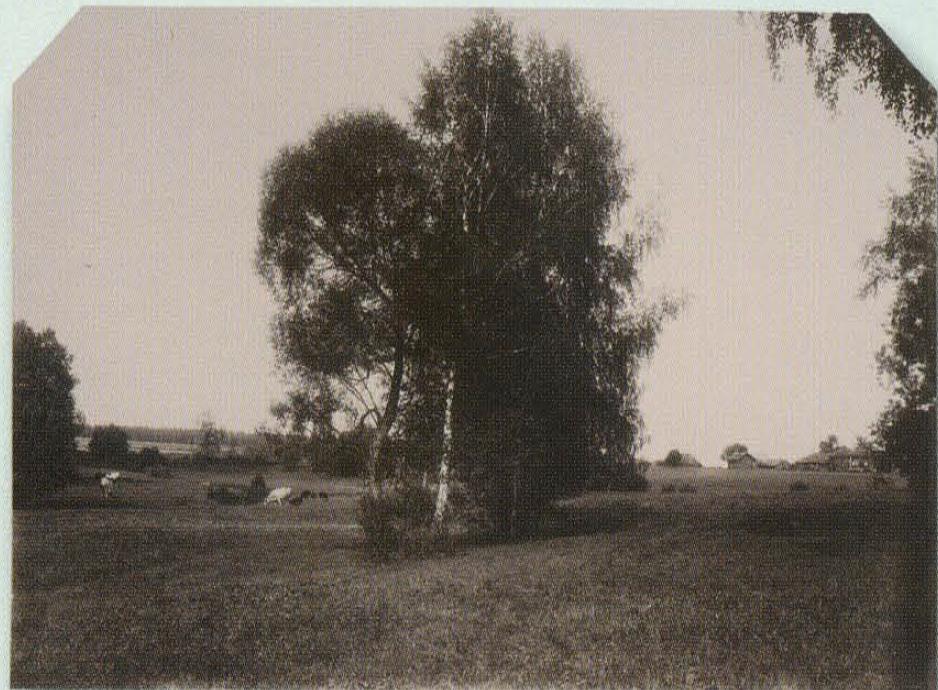 Имение Земское. 1902