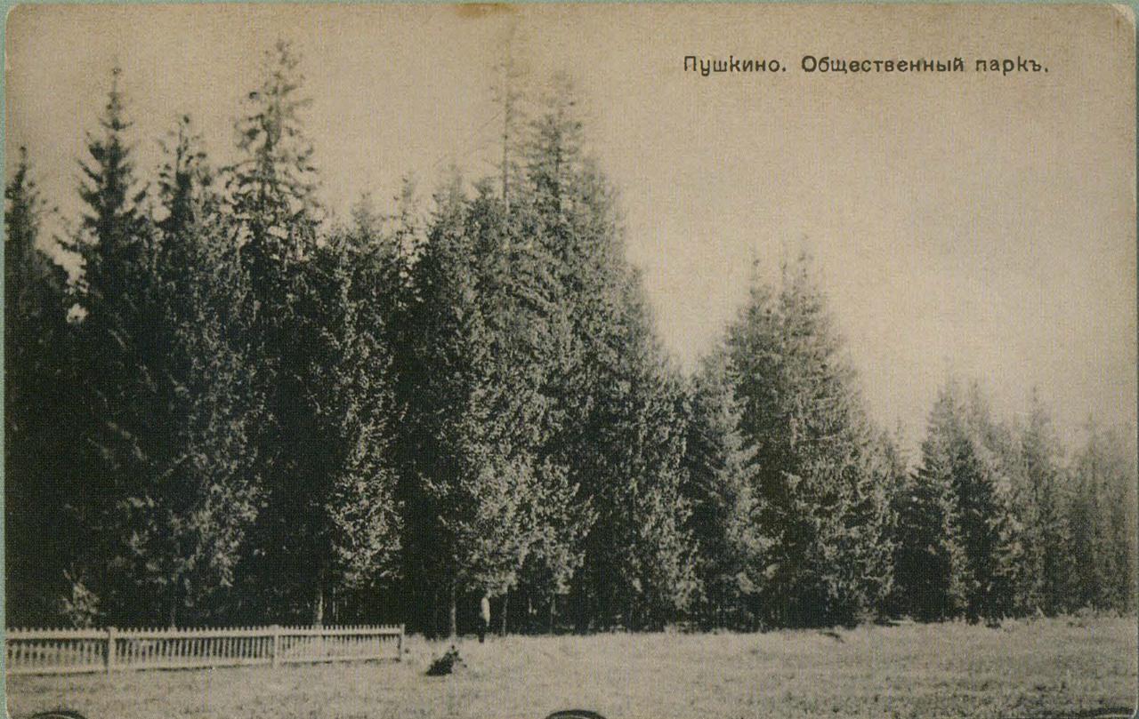 Окрестности Москвы. Пушкино. Общественный парк