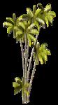 R11 - Palms - 2013 - 3 - 030.png