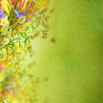Flowers (5).jpg