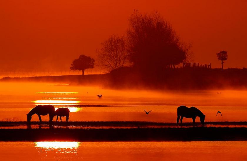 Animals and sunset