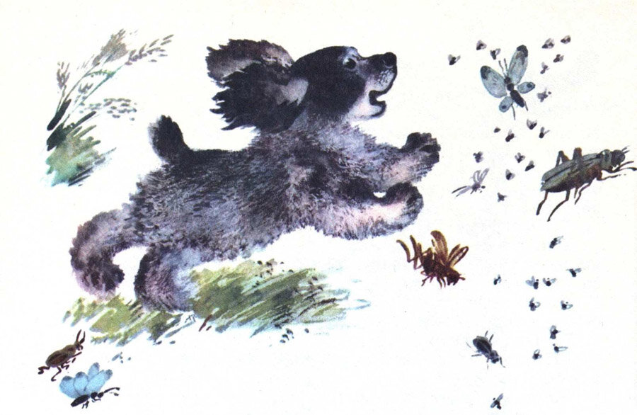 Изображение домашних животных чарушина